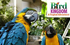 birdkingdom-small