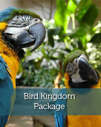 Niagara Falls Bird Kingdom Package